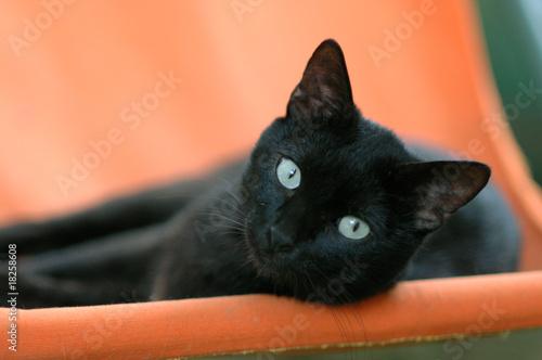 Fotografija gatto