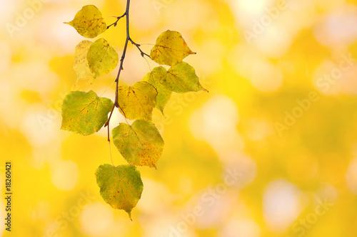 Fototapeta Bunte Blätter im Herbst obraz na płótnie