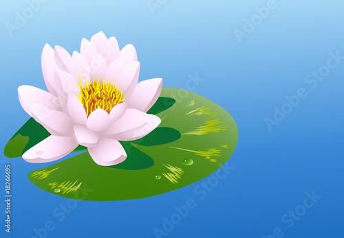 Fotografie, Obraz Water lily