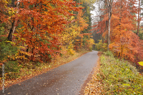 Foto op Canvas Diepbruine Colorful autumn forest and road