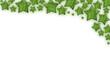 Weihnachtsstern Rand grün