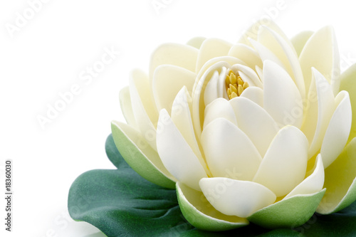 Foto op Canvas Lotusbloem Fleur de lotus