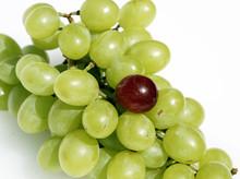 Grape Oddity