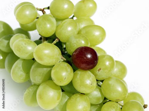 Valokuva  Grape oddity