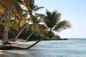Fototapeta Palmy kokosowe nad brzegiem morza karaibskiego