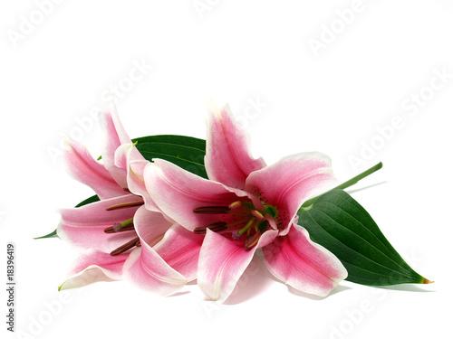 Fotografiet Pink Lily