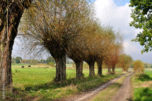 Deurstickers Zalm Polish Landscape