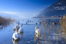 Frozen Lake In The Alps With S...