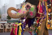 Gangaur Festival-Jaipur
