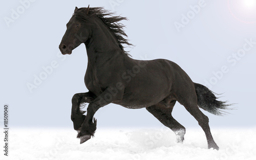 The horse gallops through the snow Wallpaper Mural