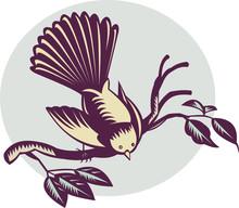 New Zealand Fantail Bird Perch...