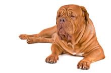 Big Dog On Duty