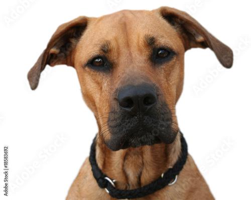 Printed kitchen splashbacks Dog Treudoofer Blick