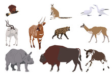 Set Of Wild Animals, Collage Style Drawing