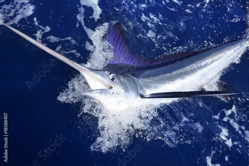 Atlantic white marlin big game sport fishing Wallpaper Mural