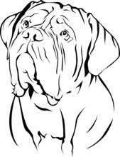 Dogue De Bordeaux - Portrait