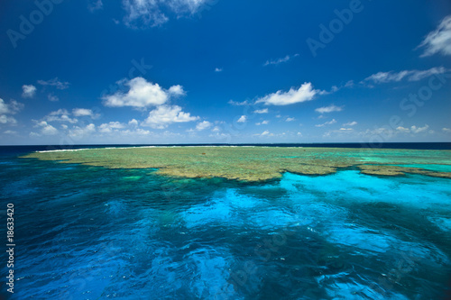 Beautiful Colors of Clam Gardens at Great Barrier Reef