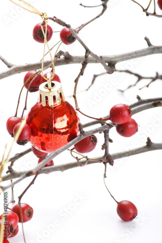 Cadres-photo bureau Cartoon voitures winter berries.
