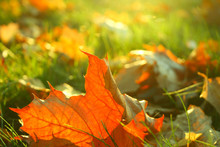 Herbstfrisch