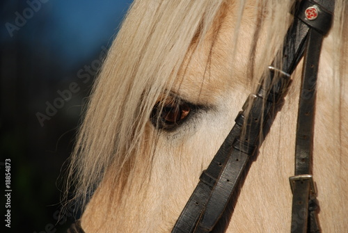 Canvas Prints Horses Horse