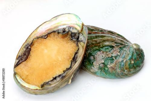 Photo abalone