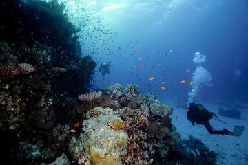 Fototapeta na wymiar plongée en mer chaude