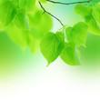 Leinwandbild Motiv Green Leaves Border