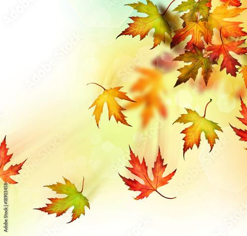 Fototapety do jadalni spadajace-liscie-jesienia-z-drzewa
