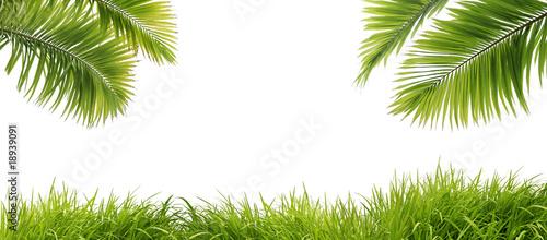 Photo sur Aluminium Palmier feuilles de palmier et herbe fraîche