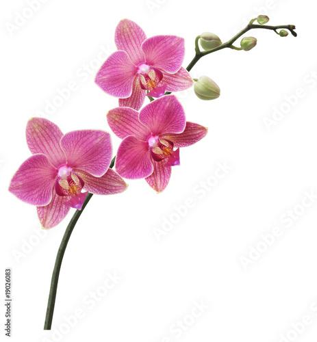 La pose en embrasure Orchidée Branche Orchidée
