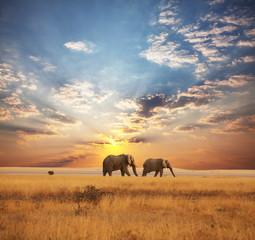 Fototapeta na wymiar Elephant