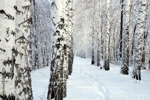 Deurstickers Berkbosje small path in winter birch wood