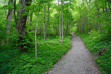 Trail To Chimney Tops
