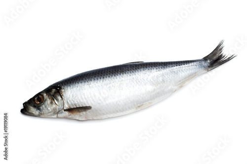 Poster Fish Salted herring on white background closeup