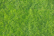 canvas print picture - Green grass background