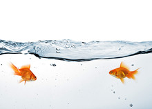Two Goldfish In Water