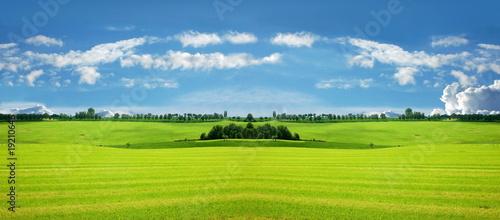 In de dag Lime groen Weidelandschaft