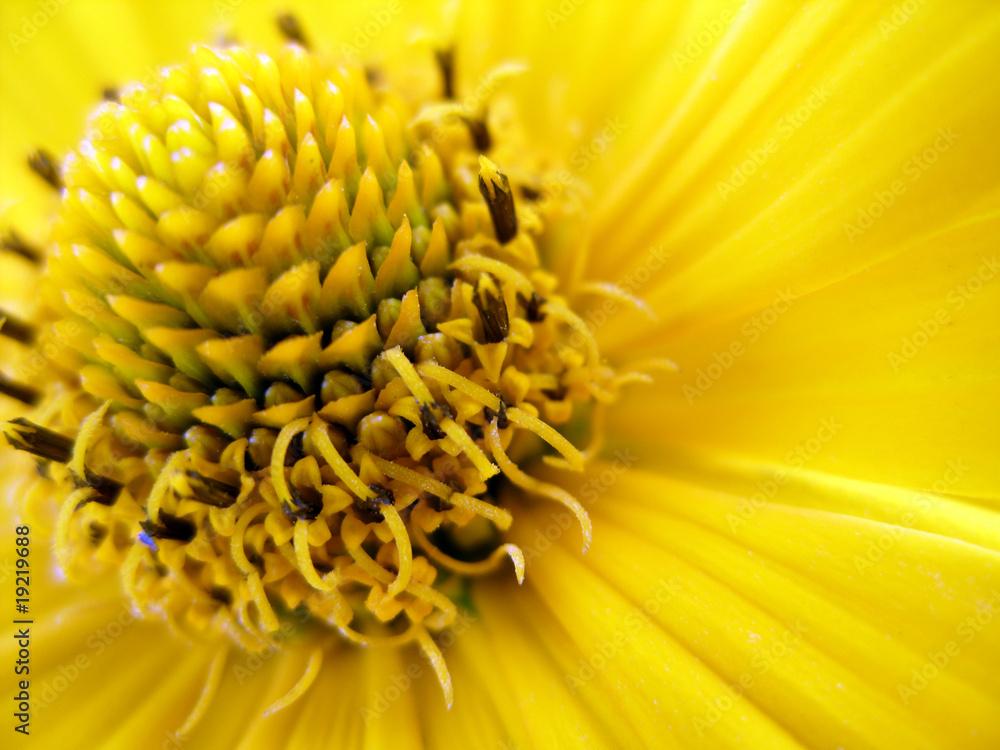 Fototapeta kwiat - flowers