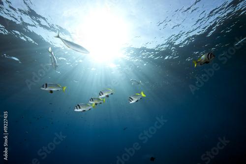 Tuinposter Koraalriffen ocean, coral and fish