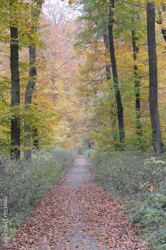 Poster Berkbosje Waldweg im Herbst