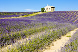 chapel with lavender field, Valensole, Provence, France - 19235251