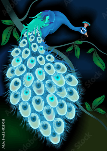 Peacock on the tree - 19239088