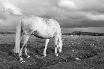 Picture with strong white horse