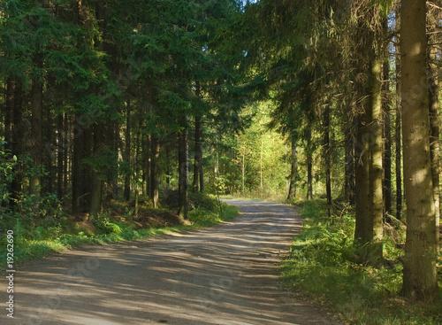 Foto op Canvas Weg in bos forest road