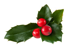Holly Leaf And Redberry