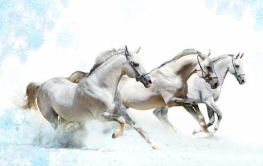 Fototapeta Koń winter horses