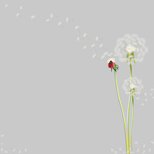 Dandelion With Ladybug On Lilac Background With Place For Text