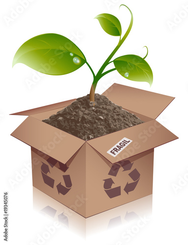 box and plant