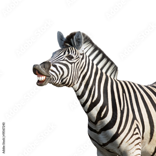 Deurstickers Zebra Laughing zebra