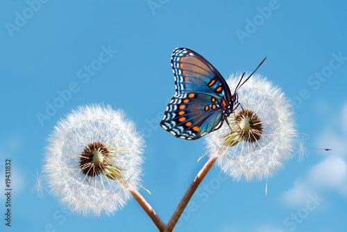 In de dag Vlinder Spring Time
